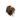 colocasia-black-magic-gumo