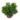 Rhipsalis_salicornioides